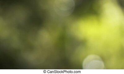 natürlich, grün, unscharfer hintergrund