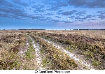 natürlich, heathland, landschaftsbild, hijken