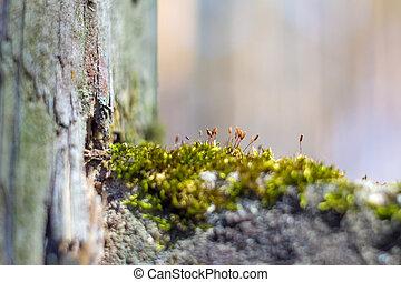 natürlich, stilleben, in, der, fruehjahr, wald, mit, verschieden, arten, von, moos, betriebe, und, insekten, auf, der, oberfläche, von, der, baum, als, a, hintergrund