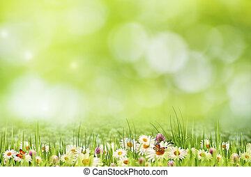 natürliche schönheit, abstrakt, bokeh, gänseblumen, blumen, landschaftsbild
