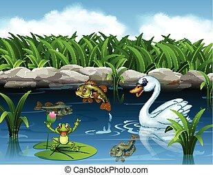 natación, lindo, cisne, rana, charca