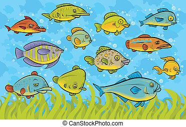 natación, pez