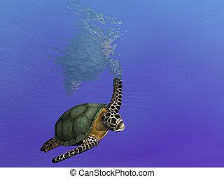 natación, sobre, turtl
