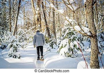natal, maple, árvores inverno, cena