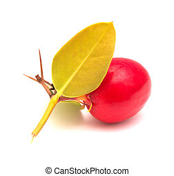 Natal plum, Carissa macrocarpa, ripe red edible fruit, traditional food plant in Africa
