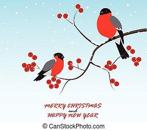natale, uccelli, augurio, ramo, seduta