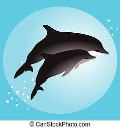 natation, couple, dauphins, océan