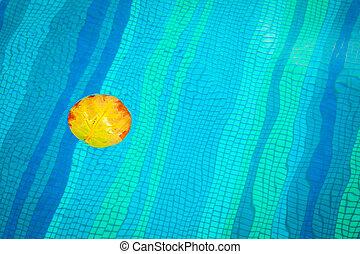 natation, jaune, feuille flottante, piscine