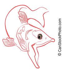 natation, saumon