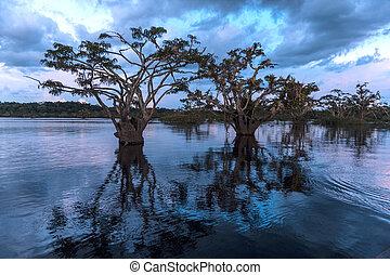 nationaal park, rainforest., grande, cuyabeno., laguna,...