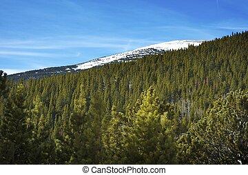 National Forest Colorado. Colorado Mountain Landscape....