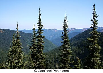National Forest - conifer forest of the Pacific Northwest