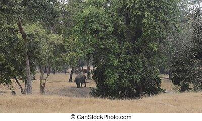 national, inde, parc, indien, forêt, éléphant