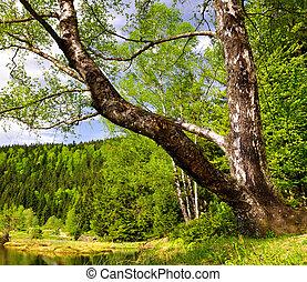 National Park Bavarian Forest