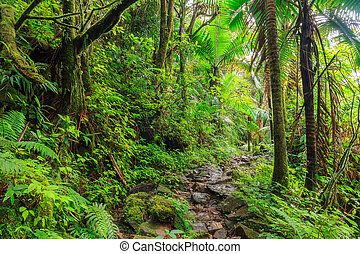 National park El Yunque