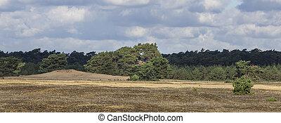Panoramic view of National Park De Hoge Veluwe, Gelderland, in he Netherlands