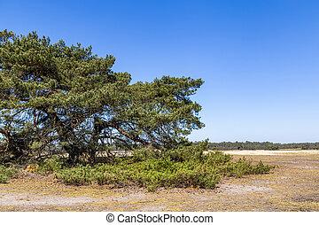 Typical landscape National Park De Hoge Veluwe The Nteherlands