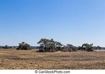 Typical landscape National Park De Hoge Veluwe The Netherlands