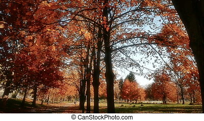national park in autumn