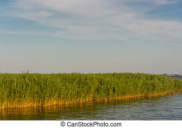 National Park Vorpommersche Boddenlandschaft on Fischland at the Baltic resort Ahrenshoop in Germany