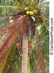 Native boy climbing on palm tree trunk