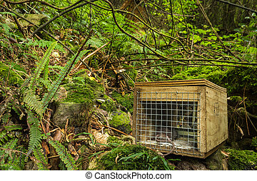 Native Bush Pest Control - New Zealand has many of these...