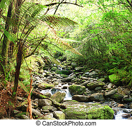 Stream among New Zealand native bush