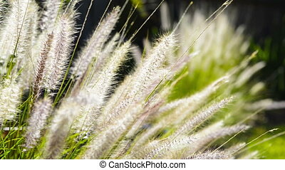 Native Grass - Close up on native grass plants in a garden...