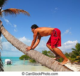 native latin indian climbing coconut palm tree trunk -...