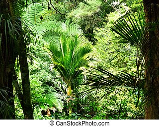 Native New Zealand bushland - Native bushland in the Totara ...