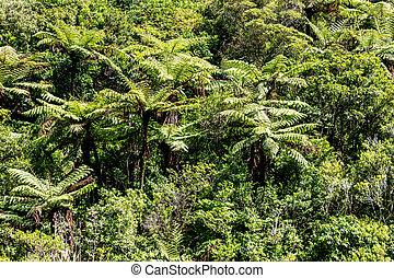 nativo, árvore, bush., zelândia, fern, novo