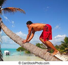nativo, latín, indio, montañismo, árbol de palma de coco,...