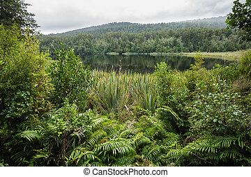 nativo, novo, bush, zelândia