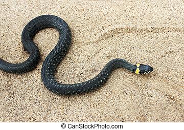 Natrix. Black snake crawling on the sand. - Natrix. Little...