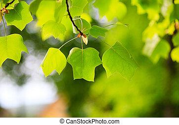natur, 葉, すてきである