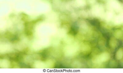 natur, abstrakt, hintergrund, mit, natürlich, linse, bokeh