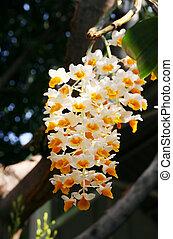 natur, av, orkidé