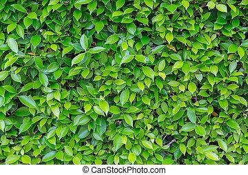 natur, blätter, grüner hintergrund