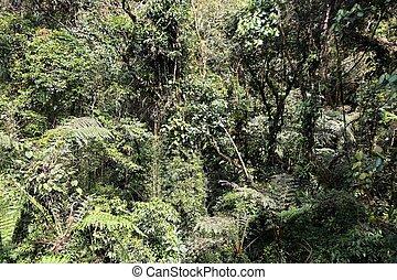 natur, brasilien