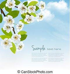 natur, fjäder, bakgrund, med, blomstrande, träd, brunch, och blåa, sky., vektor, illustration.