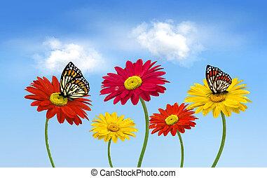 natur, fruehjahr, gerber, blumen, mit, vlinders, vektor, illustration.