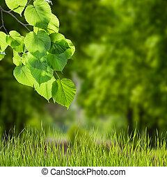 natur, grön fond, med, filial