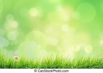 natur landskab, hos, græs