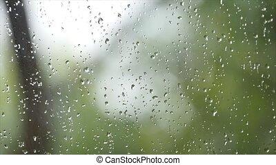 natur, regen, fenster, spritzen, grüner hintergrund, verwischen, frisch, tropfen