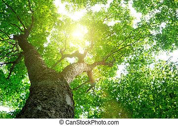 natura, alberi., sfondi, luce sole, legno, foresta verde