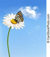 natura, butterfly., wektor, wiosna, stokrotka, kwiat, ...