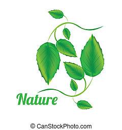 natura, disegno