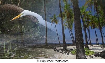 natura, e, fauna, fotomontaggio