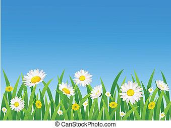 natura, fiore, fondo