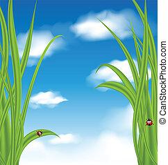 natura, fondo, con, erba verde, e, coccinella